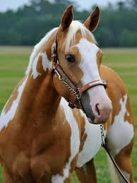 Grandma Reiter's Look-Alike Horse